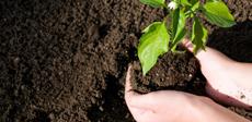 tohum ve bitki besleme